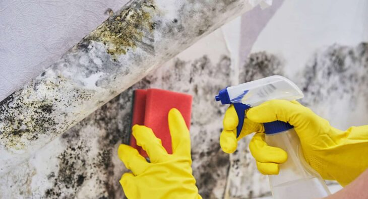 Cleaning mold in the office