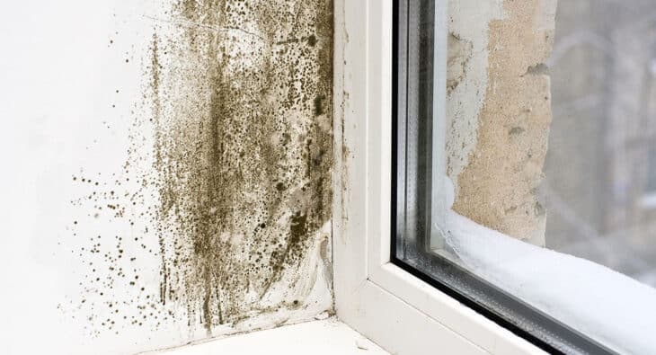 Why are regular mold inspections necessary for your home?